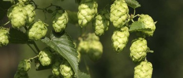 The Freshest Hops